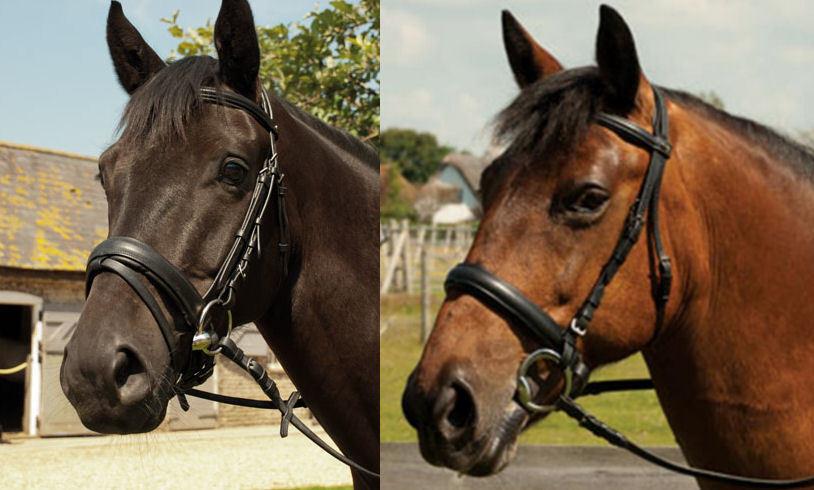 Heritage padded English Leder comfort bridle pony, cob, full