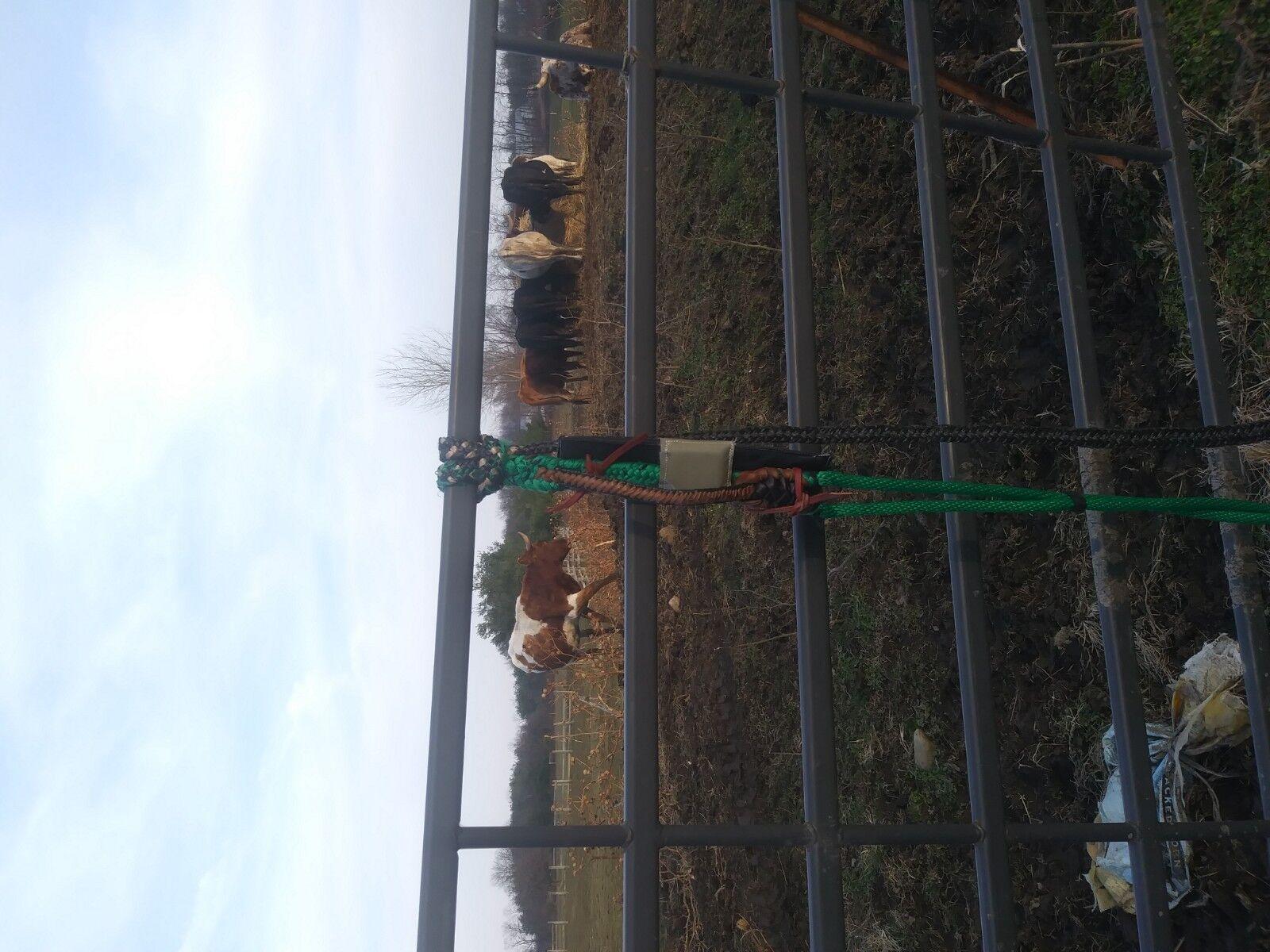 Cuerda de equipos de montar toros Toro Caballo Toro Gear PBR
