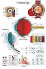 NEW HUMAN EYE MEDICAL DIAGRAM CHART INFORMATIONAL ANATOMY PRINT PREMIUM POSTER