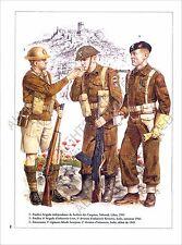 PLANCHE UNIFORM PRINT WWII Forces armées polonaises Polish Armed Forces Pologne