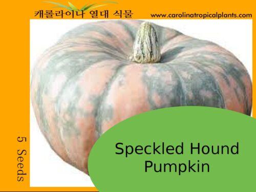 5 Seeds Speckled Hound Pumpkin Seeds