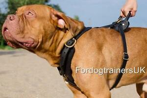Image is loading Dogue-De-Bordeaux-Harness -Handmade-By-Professionals-Comfortable-