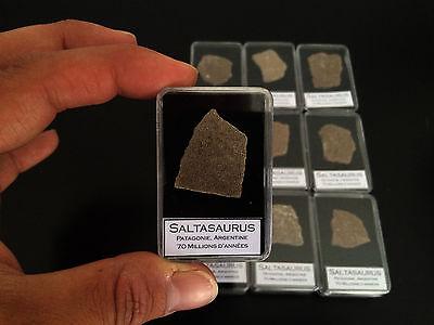 1x Coquille d/'oeuf dinosaure Saltasaurus Fossile// Fossil Eggshell dinosaur BIG!