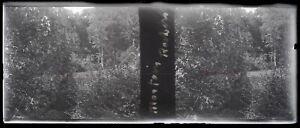 Francia Mortain Sottobosco Foto Stereo Negativo Placca Da Lente VR12e
