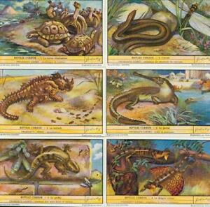 LIEBIG : S_1482 : Reptiles curieux