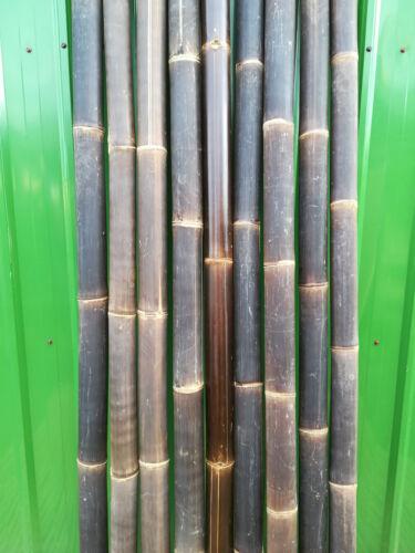 Bambusrohr Wulung Bambusstange Bambus Riesenbambus 5 x 7-8 cm x 3 m Wulung