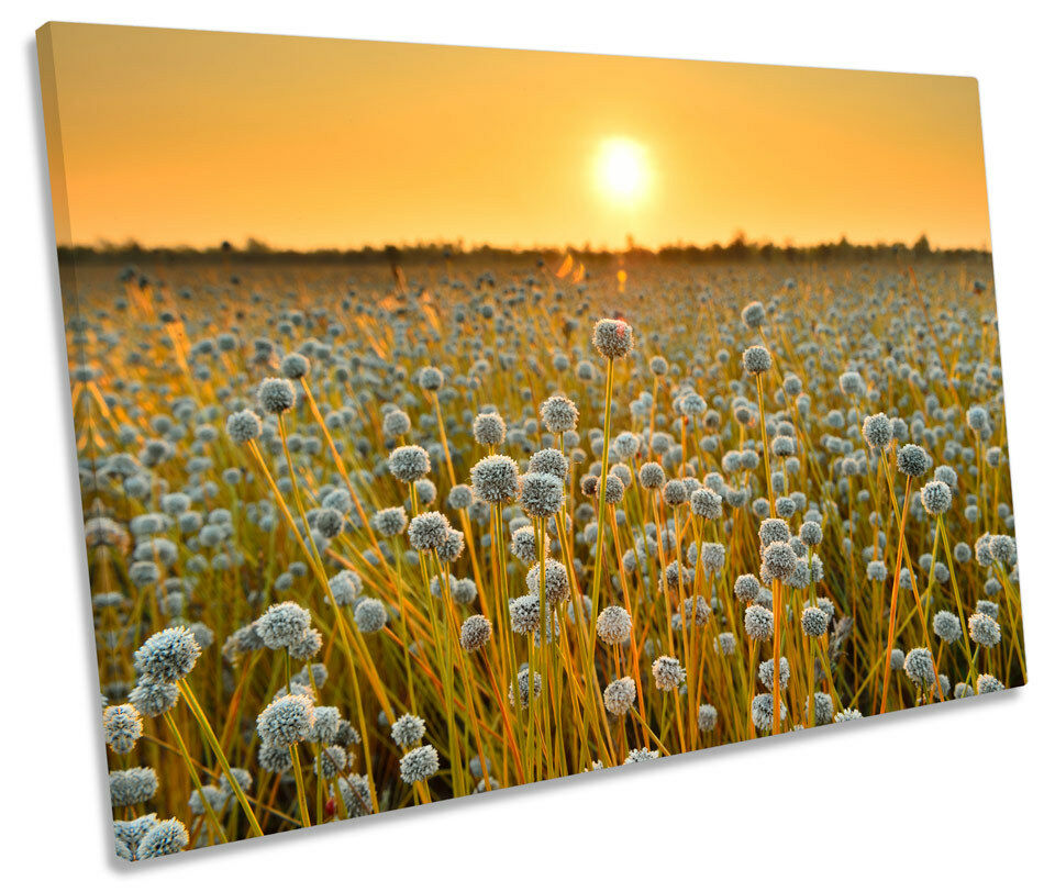 Field of Flowers Sunset Floral SINGLE CANVAS WALL ART Print Picture