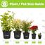 1-X-BUDDLEIA-TRICOLOUR-BUTTERFLY-BUSH-MIXED-COLOURS-HEALTHY-GARDEN-PLANT-IN-POT thumbnail 2