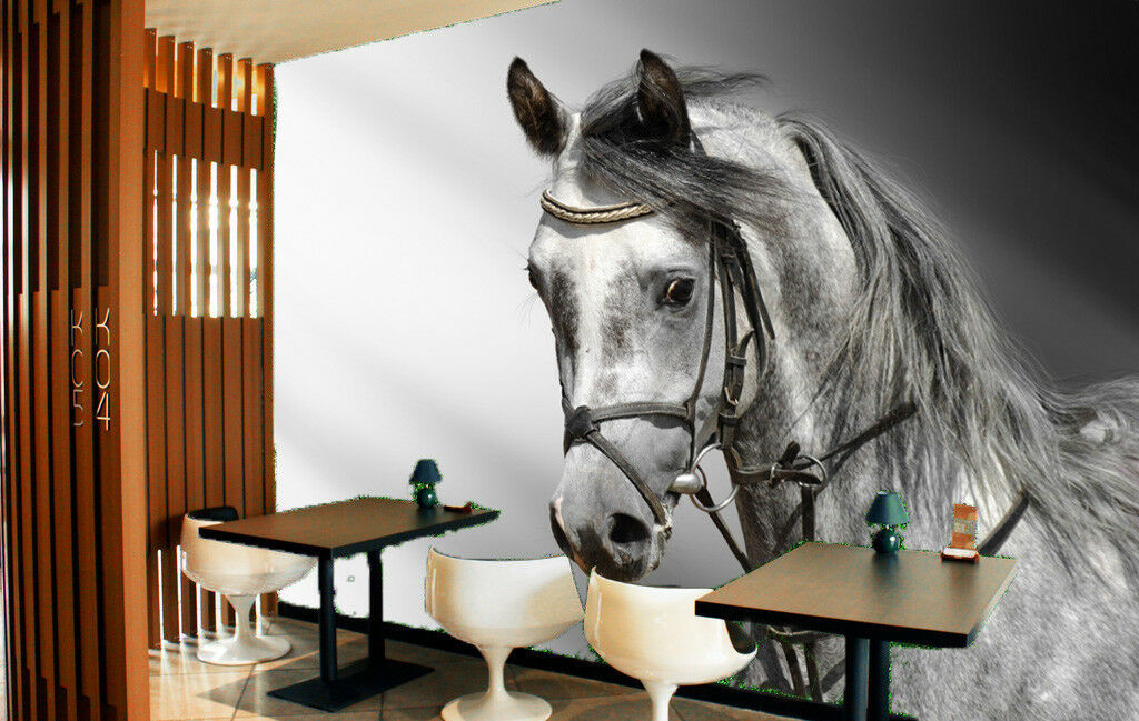 3D grau Horse Poster 8 Wall Paper Murals Wall Print Wall Wallpaper Mural AU Kyra