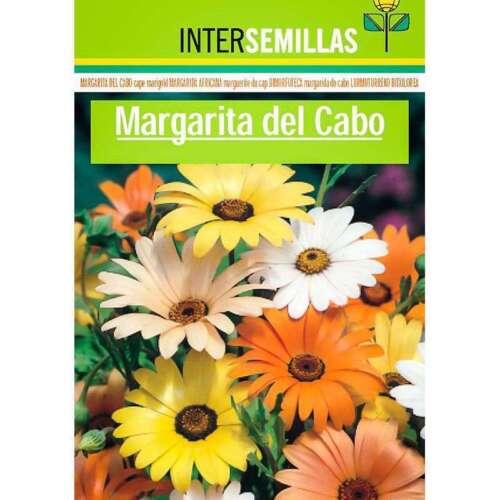 Margarita del Cabo en sobre de colores 180 semillas Dymorphoteca