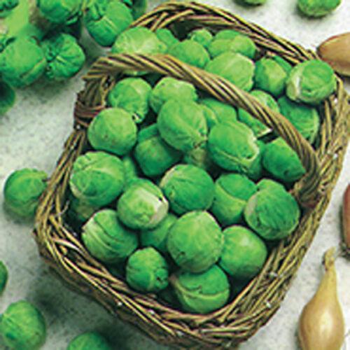 Légumes-Chou de Bruxelles-fillbasket 500 graines