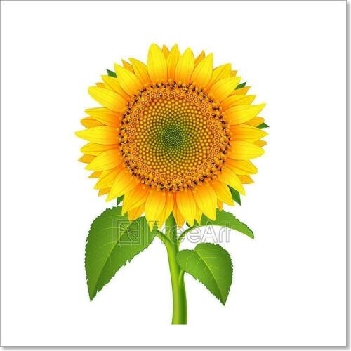 Sunflower With Pedicle Art Print Home Decor Wall Art Poster C