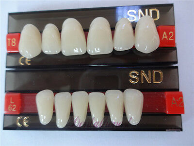 New Dental Acrylic Resin Teeth Two-Layer A2 Shade Upper & Lower Anterior T8 L62