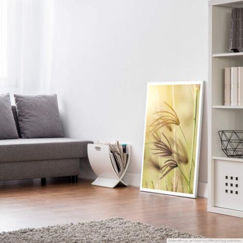 Naturfotografie – Grashalme im Wind 60x90cm Poster