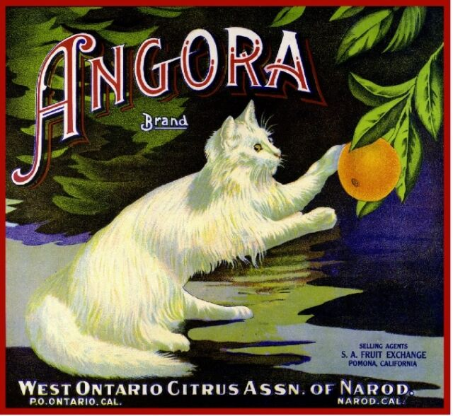 Ontario Narod Angora White Cat Kitten Orange Citrus Fruit Crate Label Art Print