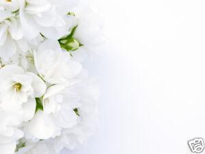 Jasmin Blumenmuster Wasser 250ml Hautreiniger Hyaluron
