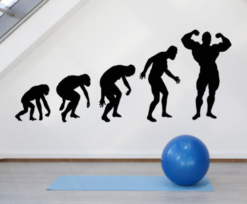 Vinyl Wall Decal Evolution Of Man Gym Bodybuilding Body Muscles Stickeers 1316ig