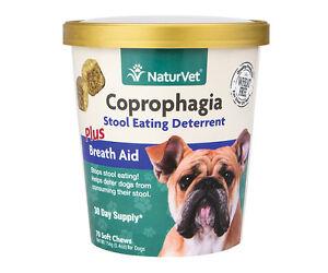 Forbid Dog Eating Poop