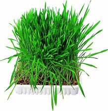 Trixie Small Animal Grass Dish, Bowl/Approx. 100 G 6035