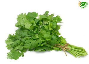salsa parsley persil seeds Perejil Doble rizado 2.700 semillas