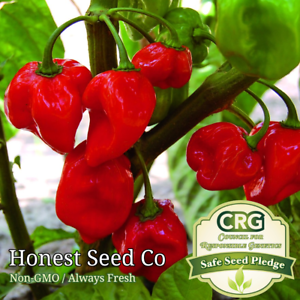 Red Habanero Pepper Seeds Caribbean   25+ Non-GMO Seeds   Heirloom Garden Seeds