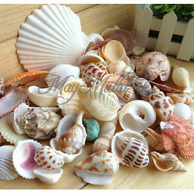 Approx 130g Beach Mixed SeaShells Mix Sea Shells Craft SeaShells Aquarium Q