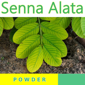 Senna-alata-200-g-Acapulo-Candle-bush-Candlestick-senna-powder-100