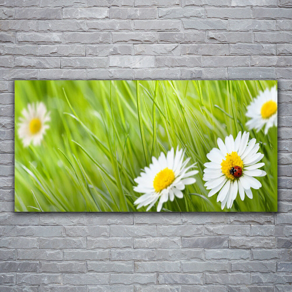 Glass print Wall art 120x60 Image Picture Grass Daisies Nature