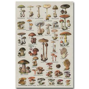 Art Mushroom Chart Biology Science Poster 20x30 24x36 P270
