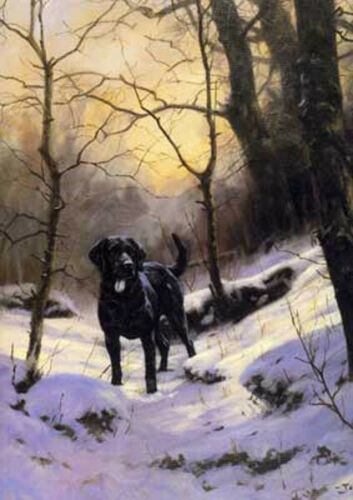 Christmas cards pack of 10 by John Trickett C48X Black Lab Dog