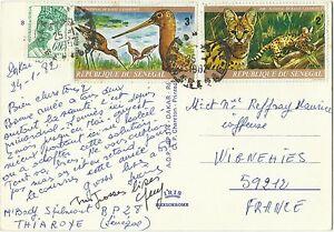 Senegal-Peche-Oiseaux-Barge-Rousse-Serval-Godwit-Birds-Vogel-Carte-Postale-1982