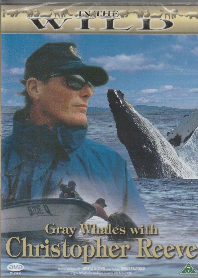In the wild flere film, instruktør Div, DVD