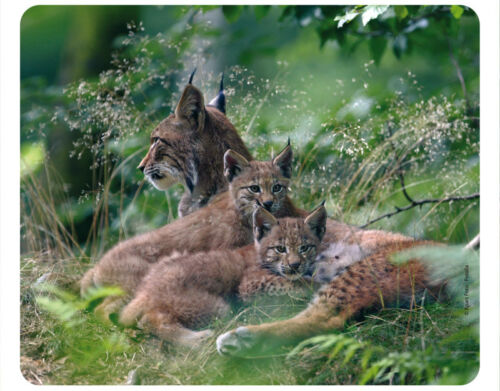 Familie Mauspad aus der Edition Colibri: Luchs Lynx Familiy neu