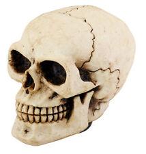 Human Skull.Universal Car Shift Knob for Stick Manual Shifter.Hot Rod Custom.New
