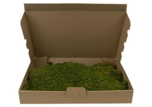 Moosplatten moosmatten acheter véritable mousse dekomoos Nature Moss plattenmoos de coffre