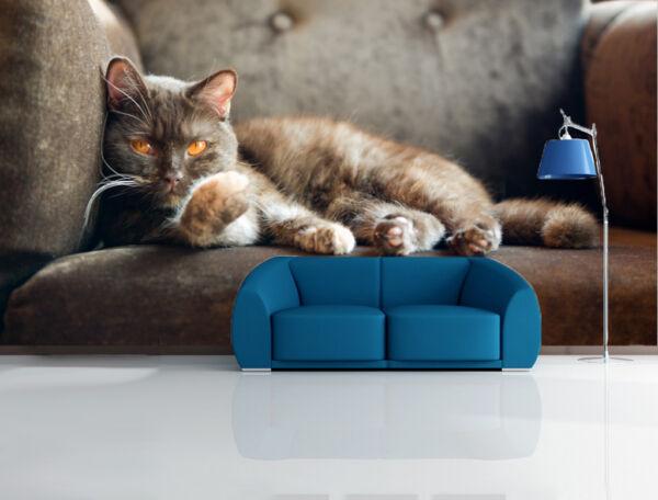 3D Sofa Katze 743 Tapete Wandgemälde Tapete Tapeten Bild Familie DE Summer