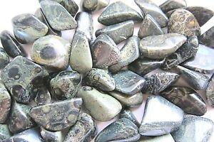 ONE-Crocodile-Jasper-Tumbled-Stone-30-40mm-Healing-Crystal-Madagascar-Shamans