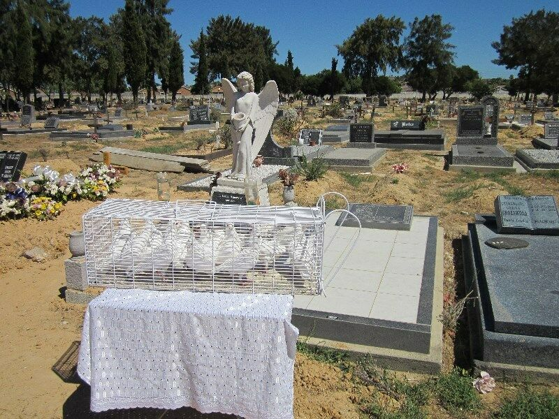 Ivan's White Doves for Funerals or Cremations
