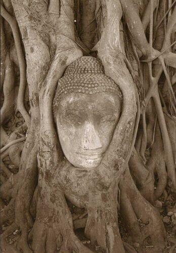 Buddha Buddha in the tree Kopf eingewachsen in eine Baumwurzel Postkarte