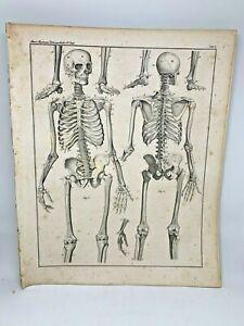 Antique-large-print-HC-1843-Oken-039-s-Naturgeschichte-Plate-1-Skeleton-Anatomy