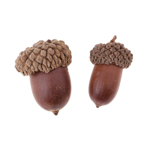 10pcs Natural Acorns Dried Table Ornament Christmas Home Decoration DIY