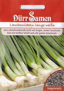 0563 Poireau Oignons Longue Blanche Kaigaroo Allium Cepa 400 Korn Dürr Graines-afficher Le Titre D'origine Une Offre Abondante Et Une Livraison Rapide