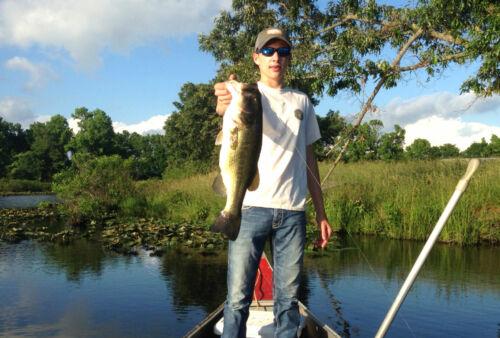 PROVEN FISH CATCHER GOOD 20-7in LIZARD PUMPKIN SEED PEPPER CHARTREUSE TAIL