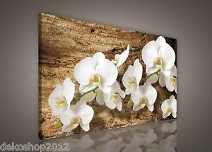 fototapete tapete bild wandbild bilder canvas orchidee. Black Bedroom Furniture Sets. Home Design Ideas