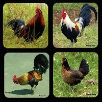 Chicken Coaster Set Of 4