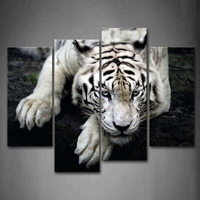 Wild Lion Animal Canvas Print Painting Framed Home Decor Wall Art Picture Shadow