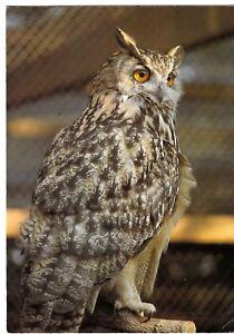 Postcard-EUROPEAN-EAGLE-OWL-Ref-A15