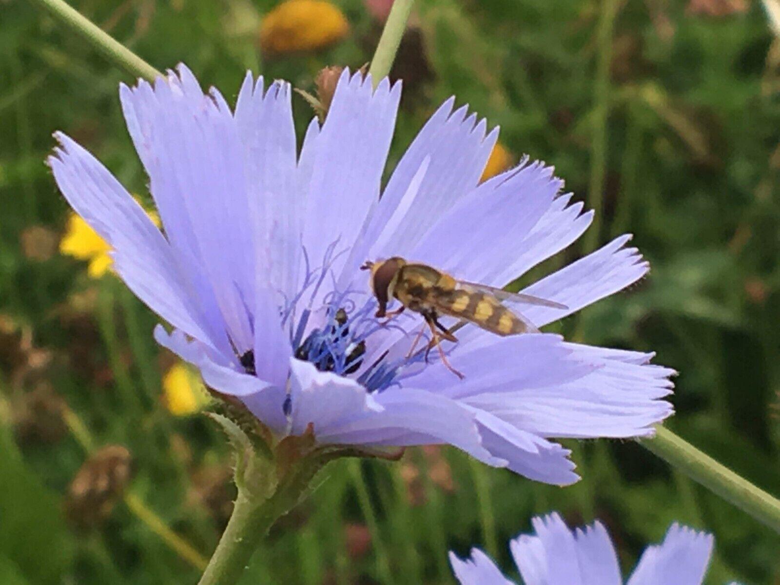Blaumenwiese statt Blaumenstrauß, Patenschaft für Blühstreifen, 150qm