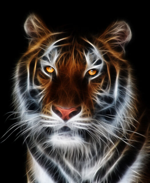 Buy 30 X 24 Tiger 3 Hood Rv Trailer Or Wall Mural Decal Decals