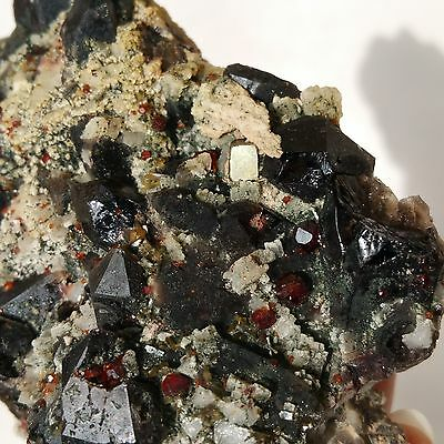 149g Natural Black Quartz& Red garnet &pyrite  Crystal Cluster Mineral Specimen